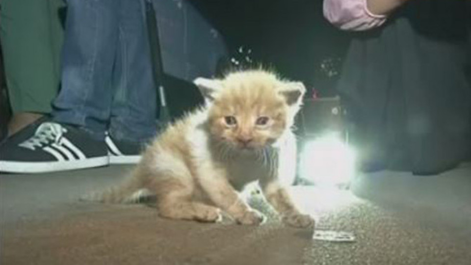 Kitten Trapped in Car Engine Is Rescued After Driver Hears His Faint Meows