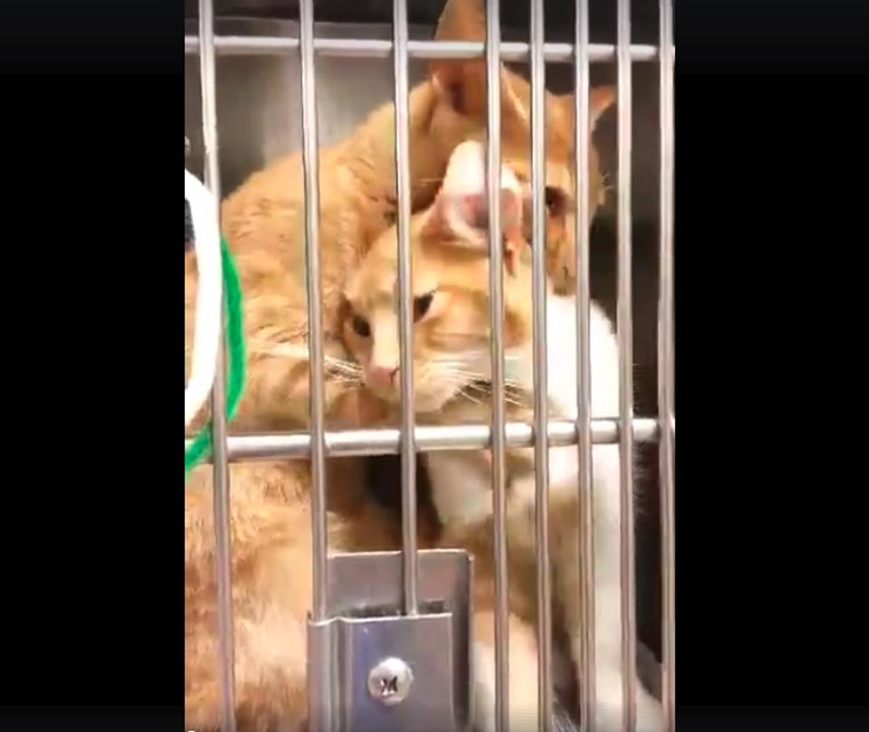 Shelter Kitty Gives Her Sister The Cutest Hug Ever!