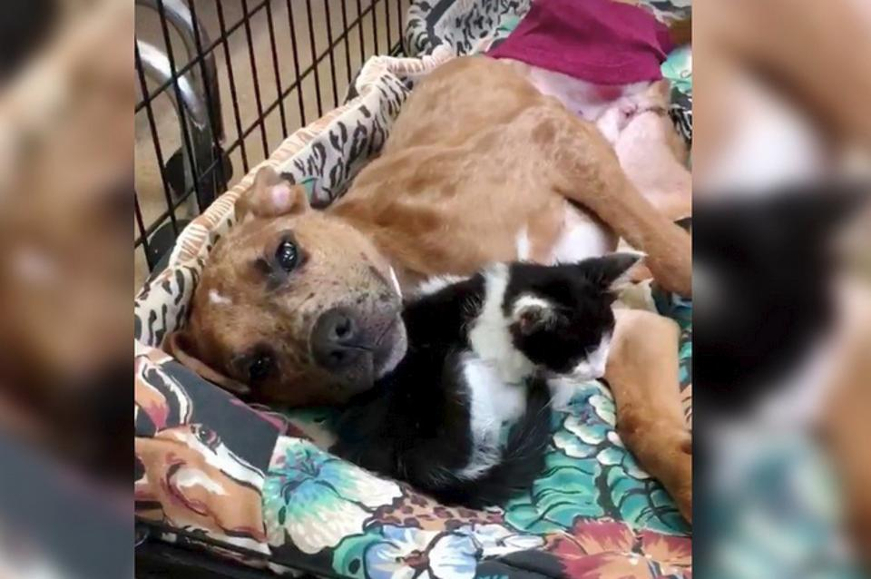 Sick Kitten Finds Comfort in Injured Dog and The Two Help Each Other Heal