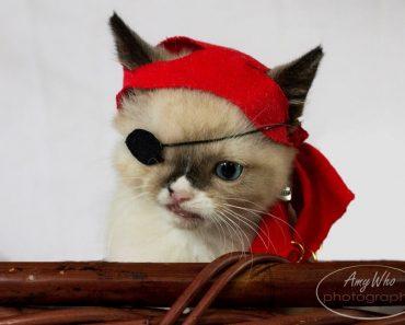 Sir Stuffington, A Cute Pirate And A Survivor
