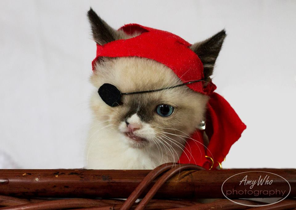 Sir Stuffington, A Cute Pirate And A Survivor