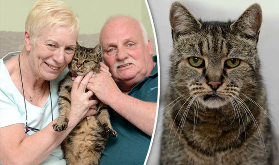 World's Oldest Cat Nutmeg Dies After 144 Cat Years