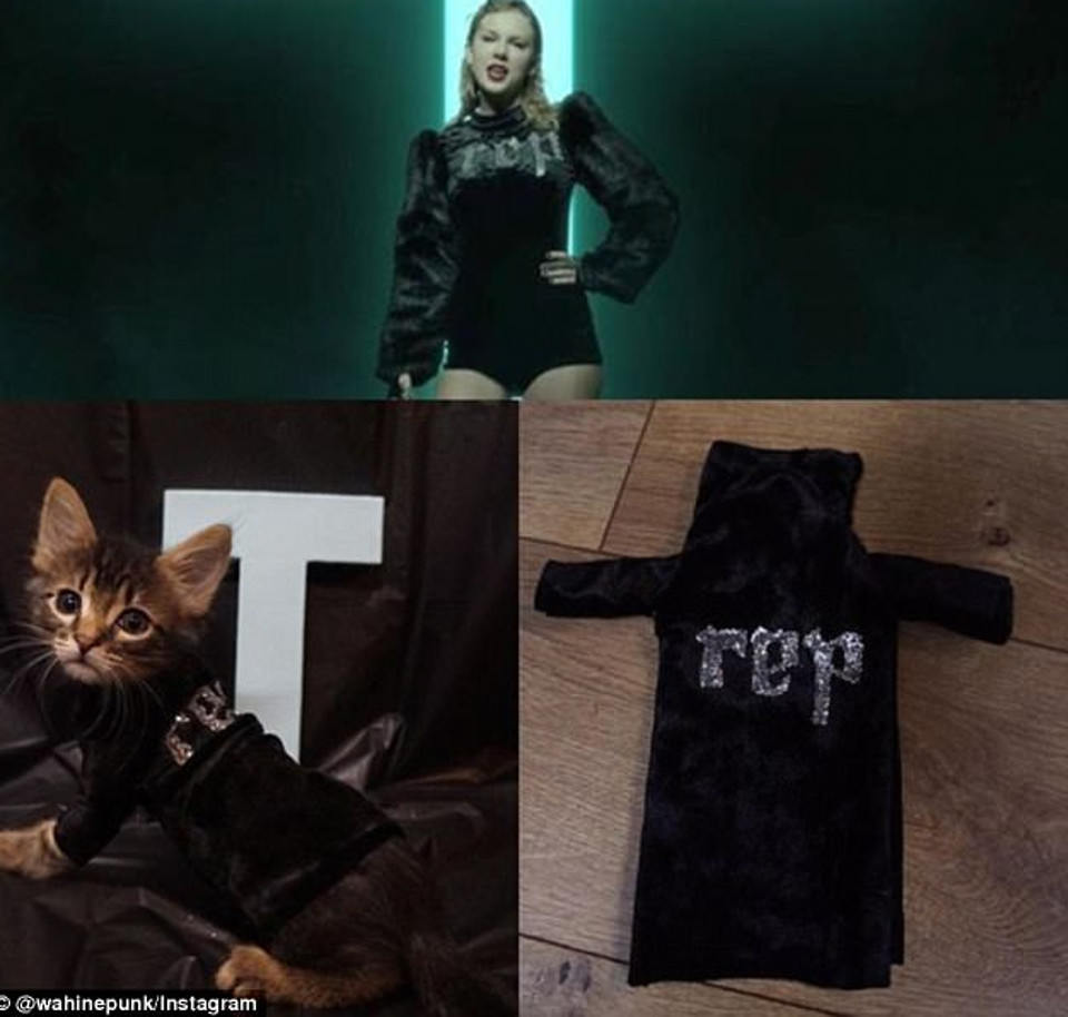 Kittens outfits
