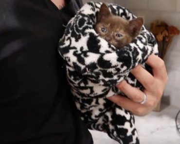 Kitten Rescued Moments Before Irma Crashed Into Florida…