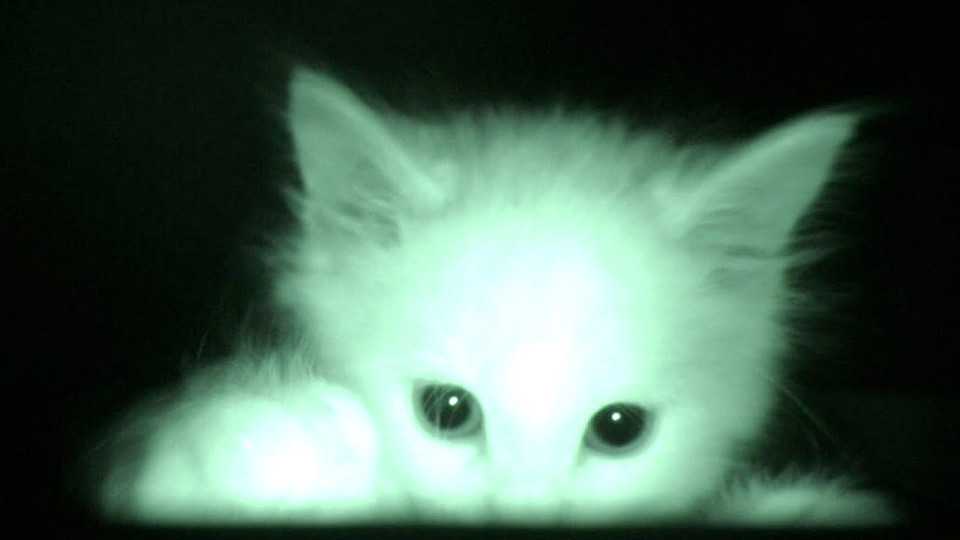 He Was Curious Why His Foster Kittens Slept All Day So He Set Up A Camera And Started Recording!