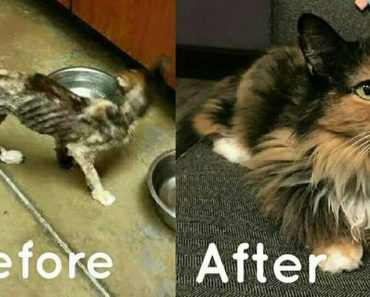 14 Year Old Cat Weighed Same As A Kitten. Today She Can't Stop Playing