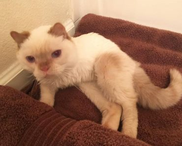 3 Legged Kitty Who Was Too Weak To Walk Or Even Crawl Is Rescued