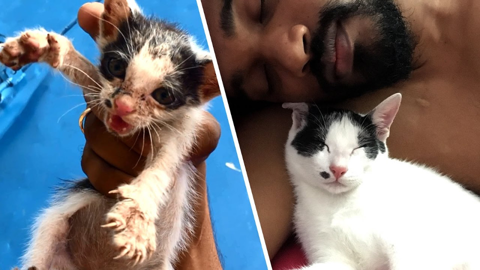 A Terrified Abandoned Kitten Was Rescued. Her Transformation Will Amaze You