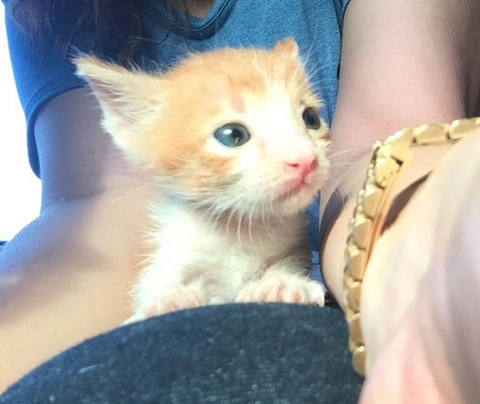 Alden the kitten