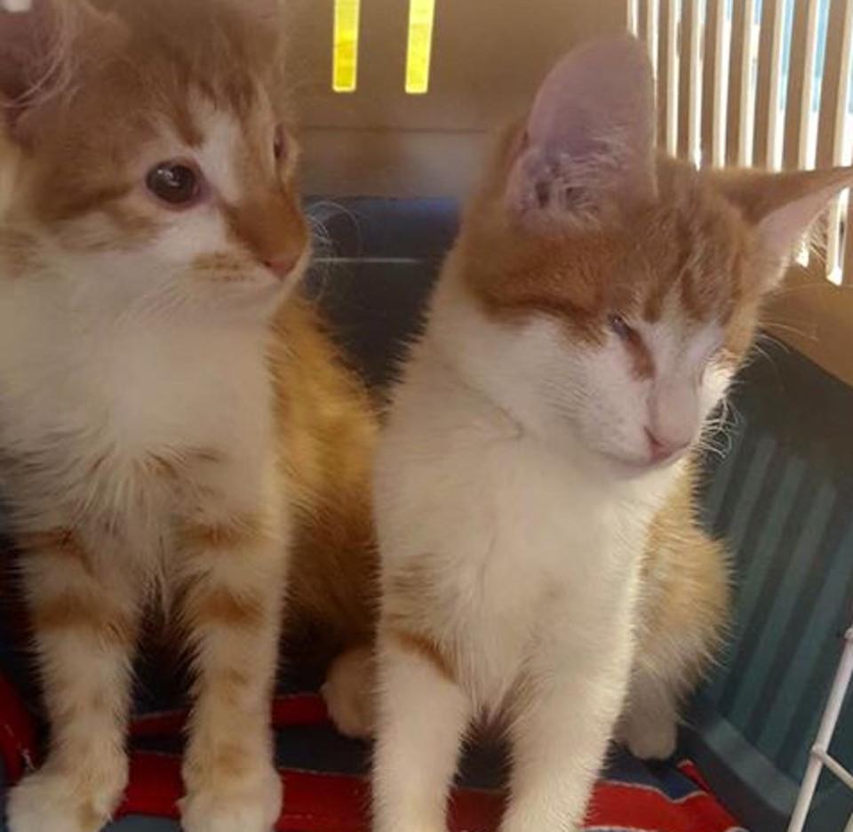 Kittens twins