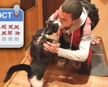 Cat And Owner Meet After 20 Days Of Separation!