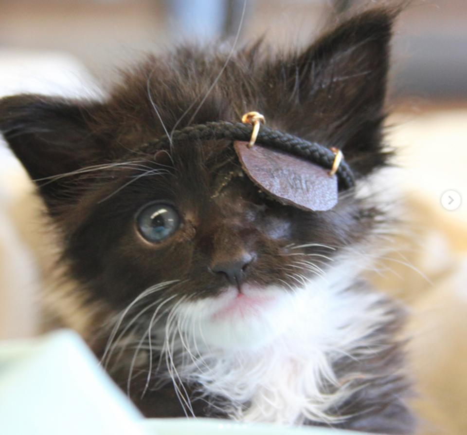 Rescue Kitten Gets Mini Eye Patch