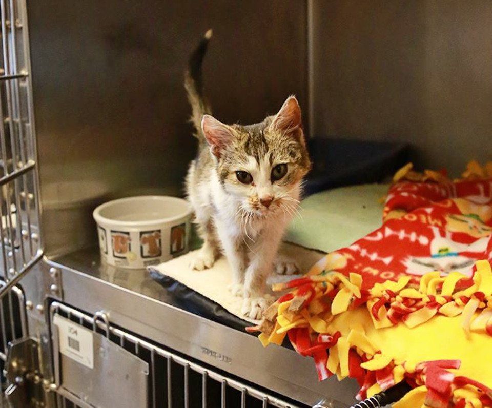Kitten Found Frozen To A Blanket Is Brought Back To Life