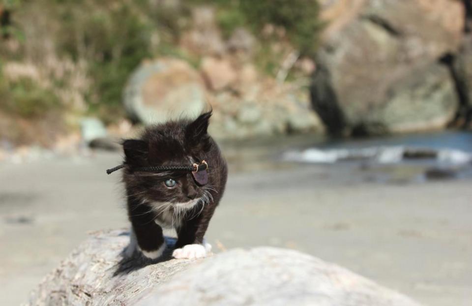 Scar the kitten