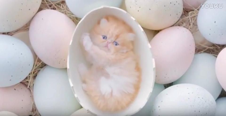 Kittens Come Out Of The Eggs In A Thai Commercial!