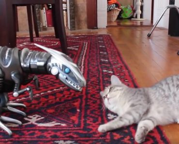 Kitty Meets Her New Toy – A Robot Dinosaur. Her Reaction Is Priceless