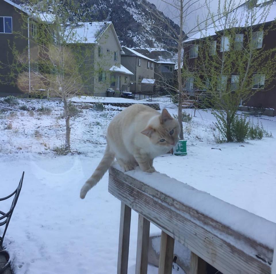 Lazarus in snow