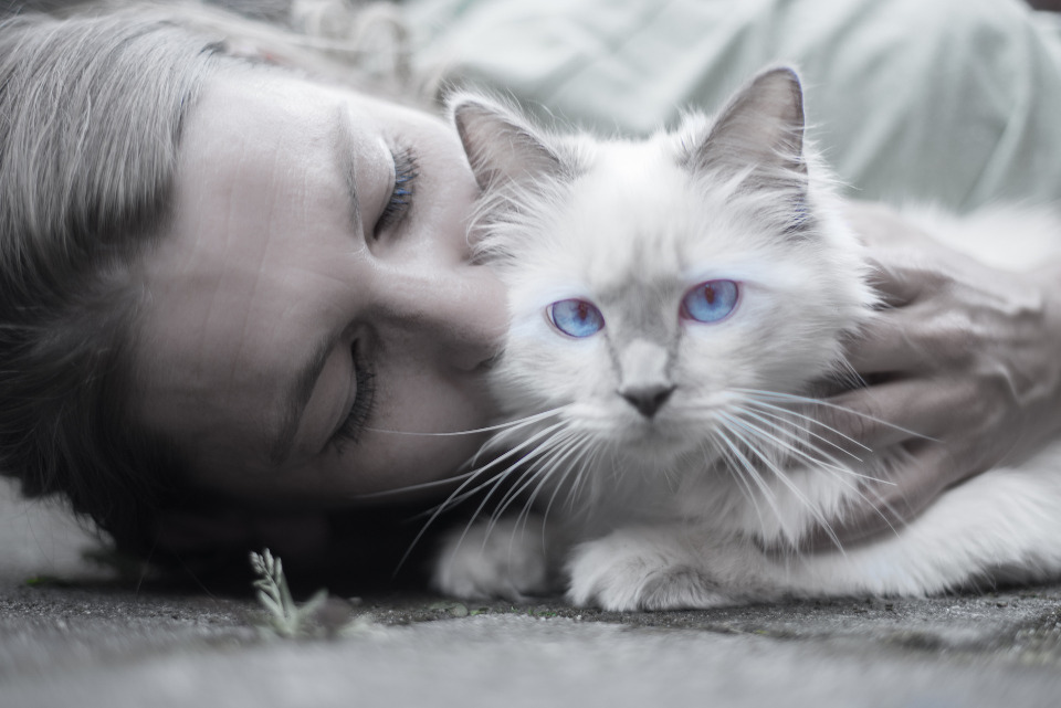 New Study Reveals That Cats And Owners Interact More With Each Other After A Longer Duration Of Separation