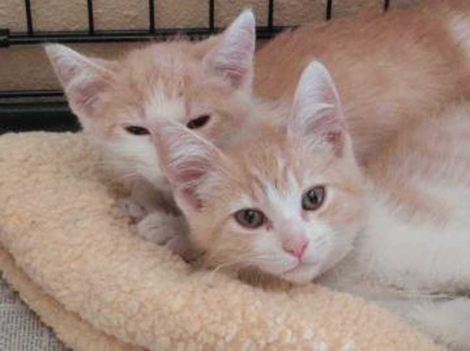 Ozzie and Butter Kittens