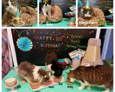 Rescuers Organize A Surprise Party For 3 Very Special 20 Year Old Cats