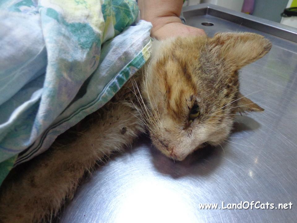 cat treated at the vet