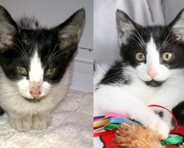 Stray Sick Kitten Gets Help. In Just 7 Days She Is Totally Transformed!