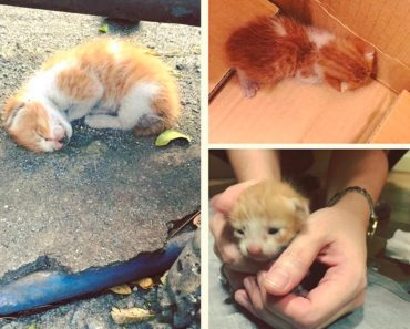 Tiny Kitten Found Curled Up On The Ground, Is Saved