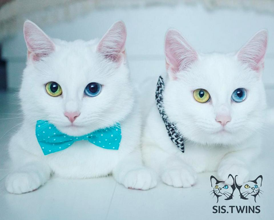 Cats Are Born Almost Completely Identical. It's Pretty Hard To Tell Them Apart