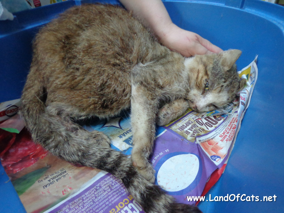 senior rescued cat