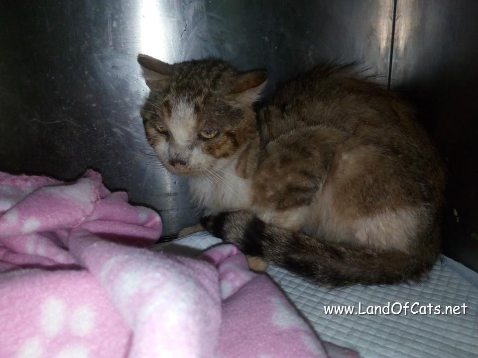 kitty at the vet