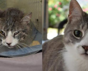 Cat Became Blind From Being Hit By A Car. Today He Is Safe And Loved