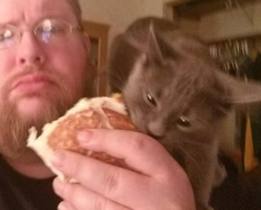Every Time Human Eats, Kitty Steals His Food And Run