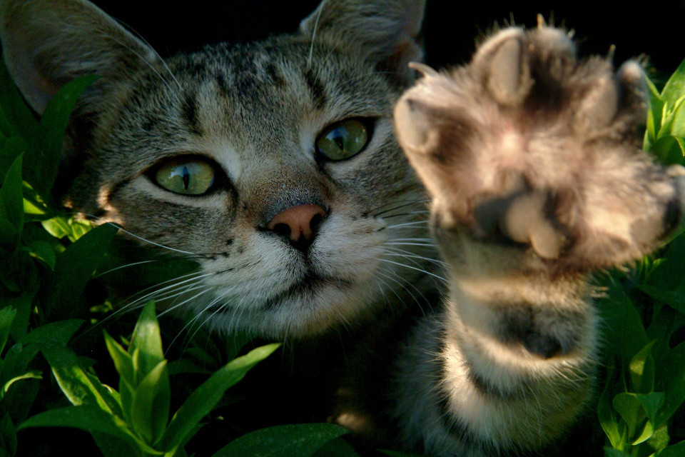It's Now Illegal to Declaw Cats in Denver!