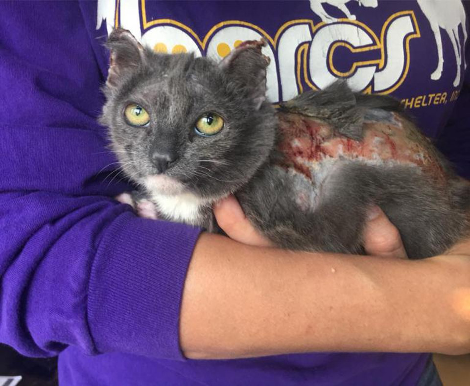 Kitten With Burns On Nearly 80% Of Her Little Body Is Getting The Care She Needs!