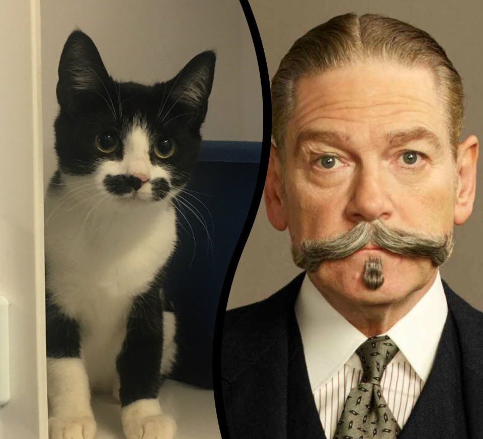 Tasha, The Kitten That Looks Like Poirot