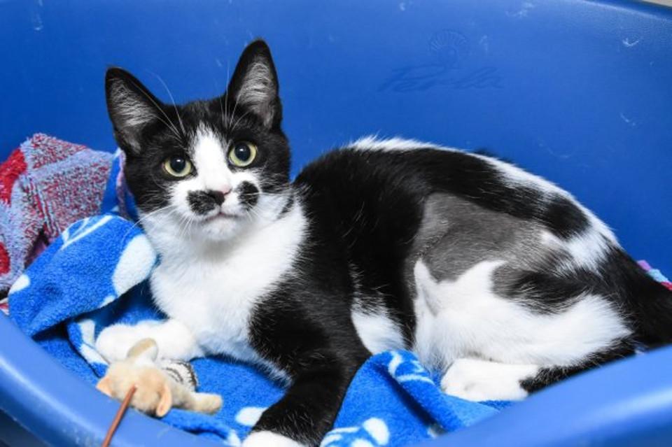 Tasha kitten