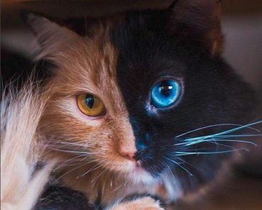 The Kitty Who Looks Like Two Cats In One