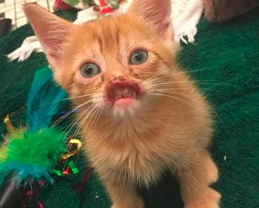 Adorable Kitten Without A Nose Finally Gets It Fixed