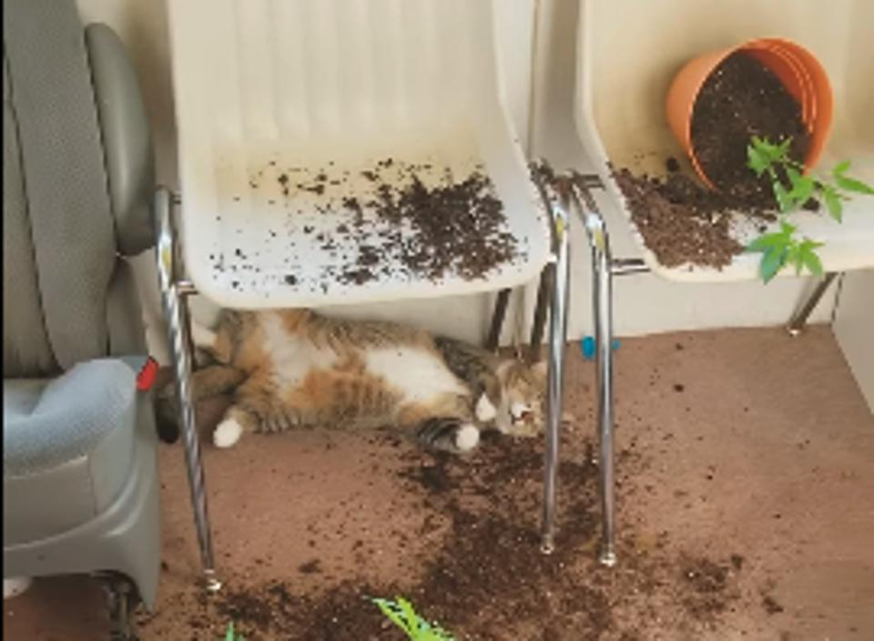 Woman Comes Home To Find Her Cats Almost Passed Out After Trying Her Homegrown Marijuana!