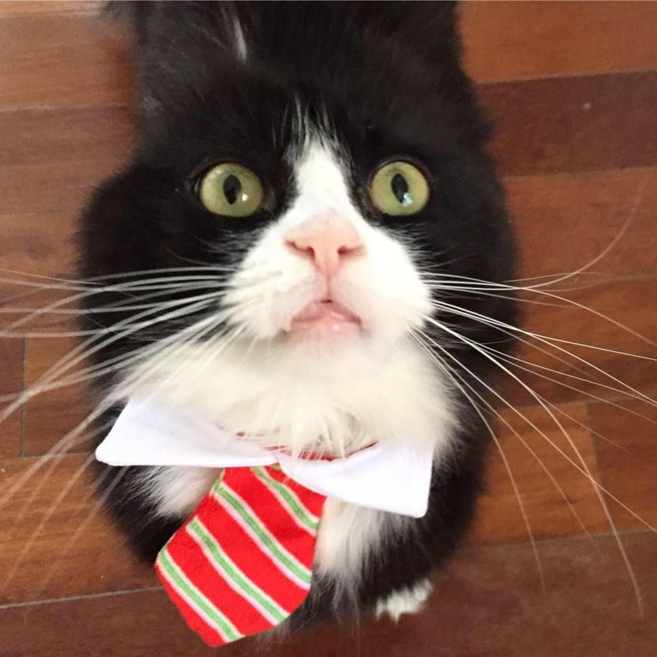 Justin cat