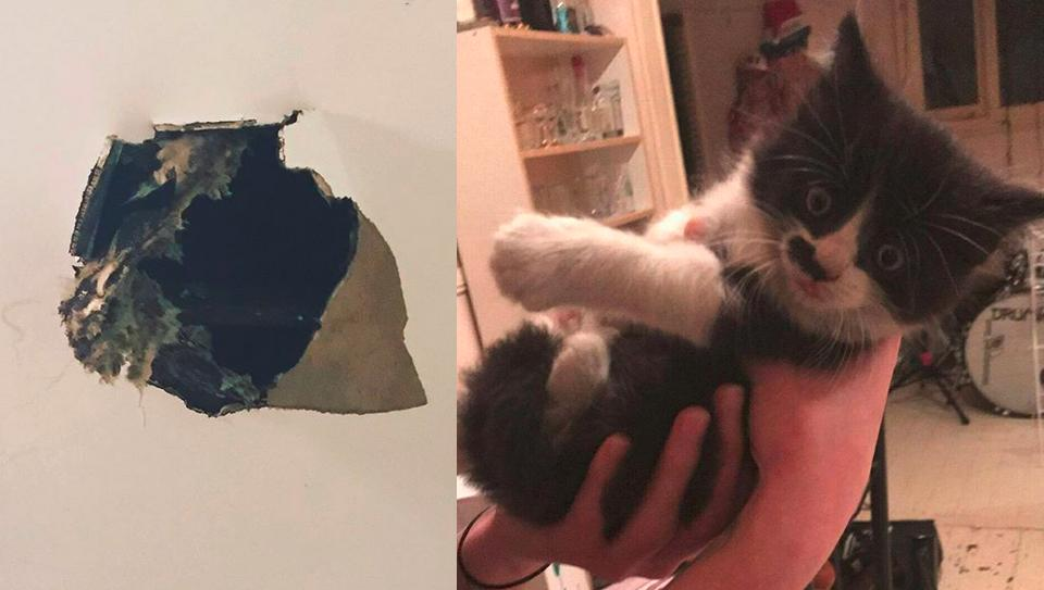 Kitten Literally Fell Through a Ceiling Into the Heart of His New Mom!
