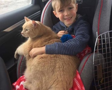 This Boy Had The Chance To Adopt A Shelter Pet! He Decided To Adopt A Senior Ginger Cat Who Lost His Home.