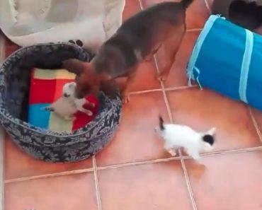 Kitten And Owlet Become Best Friends At A Japanese Owl Café - Owlet kitten meet coffee shop become best friends