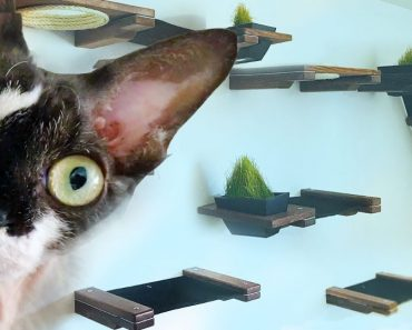 Woman Turns Her Living Room Into A $600 Indoor Custom Cat House!