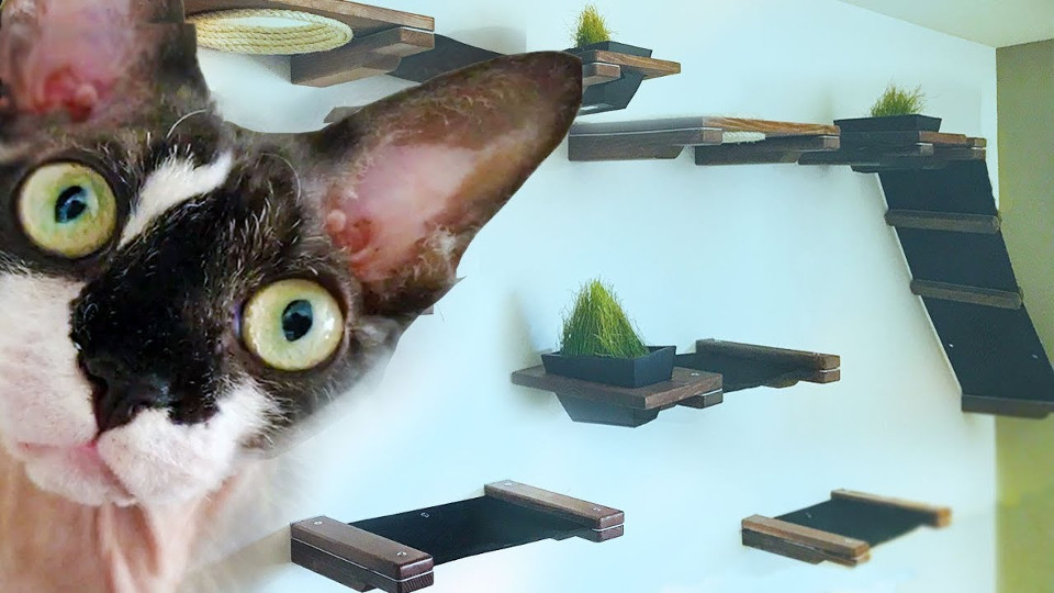 Woman Turns Her Living Room Into A 600 Indoor Custom Cat