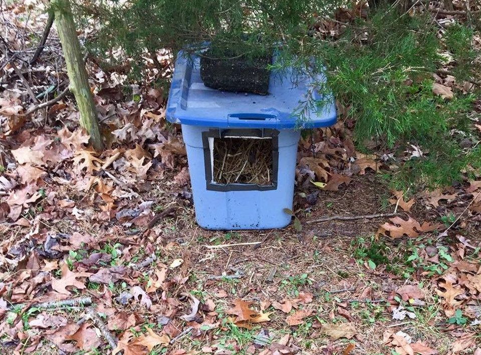 Feral cats shelter