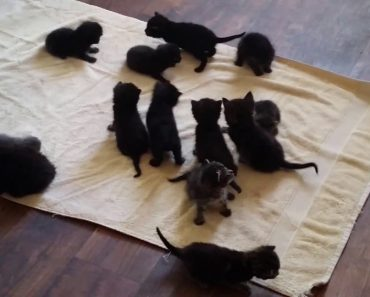 14 Miracle Kittens Left In A Dumpster To Die Were Found And Saved