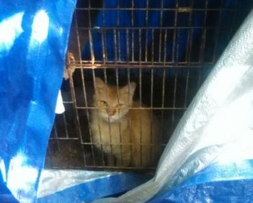 Cat Confined To Bird Cage Entire Life Finally Gets Rescued