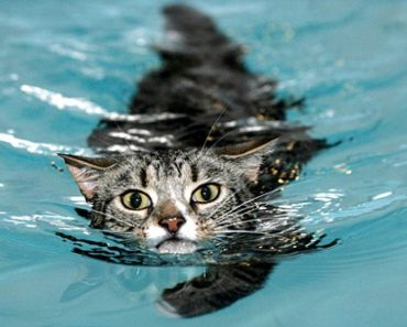 She Was Told Her Cat Was Never Going To Use His Front Legs Again But After Swimming Sessions Everything Changed
