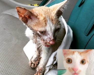 Cat Found With Smashed Jaw Is Rescued By Kind Hearted Woman